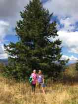 This spruce was huge!