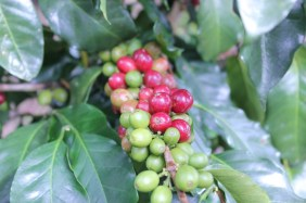 Direct Trade Coffee Beans