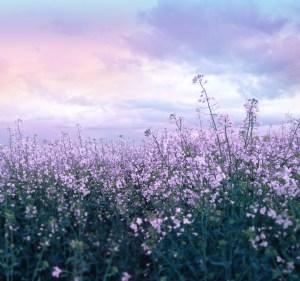 purpleflowerscovermoreGodsteps