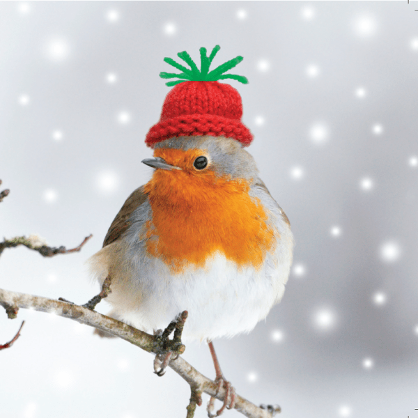 Robin Christmas Card for Mobile Chemotherapy Unit Charity project