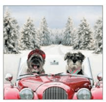 Dog christmas Card for Mobile Chemotherapy Unit Charity project