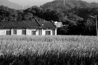 合樸農學市集 » 【好文分享】有機農業與農村(上)