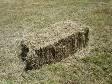 Web Hay