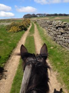 hollingley-farm-ride