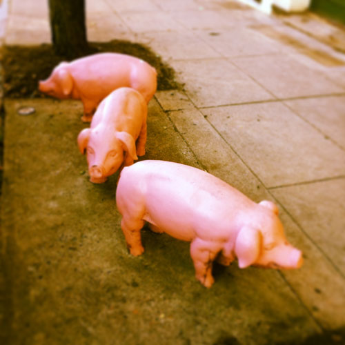 Liberty's Bar & Bottle - Pigs