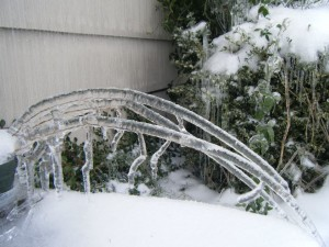 Stems encased in ice