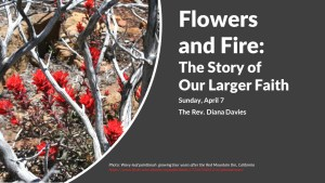 Flowers blooming after a wildfire