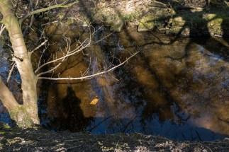 DAShadows&Reflections-3