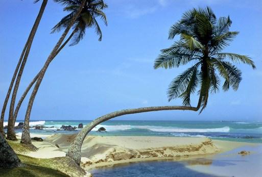 Tropical Paradise.Les Nixon jpg