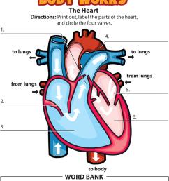 Activity: The Heart - Johns Hopkins All Children's Hospital [ 1200 x 924 Pixel ]