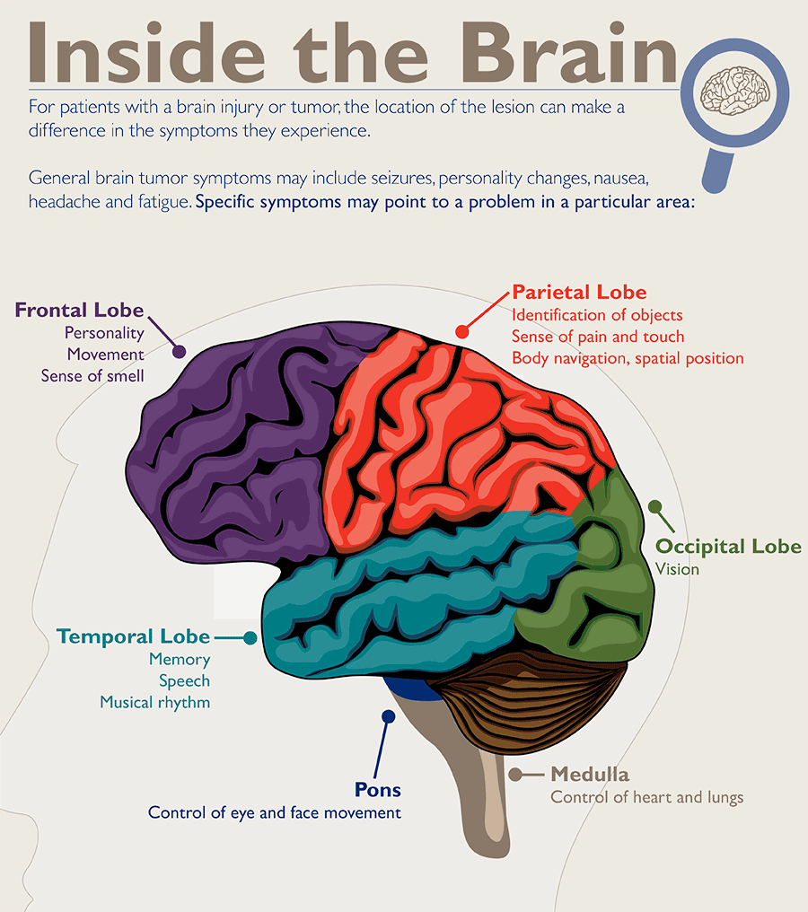 hight resolution of diagram of different brain regions and symptoms specific to each