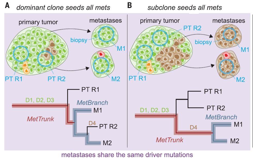 identical driver gene mutations