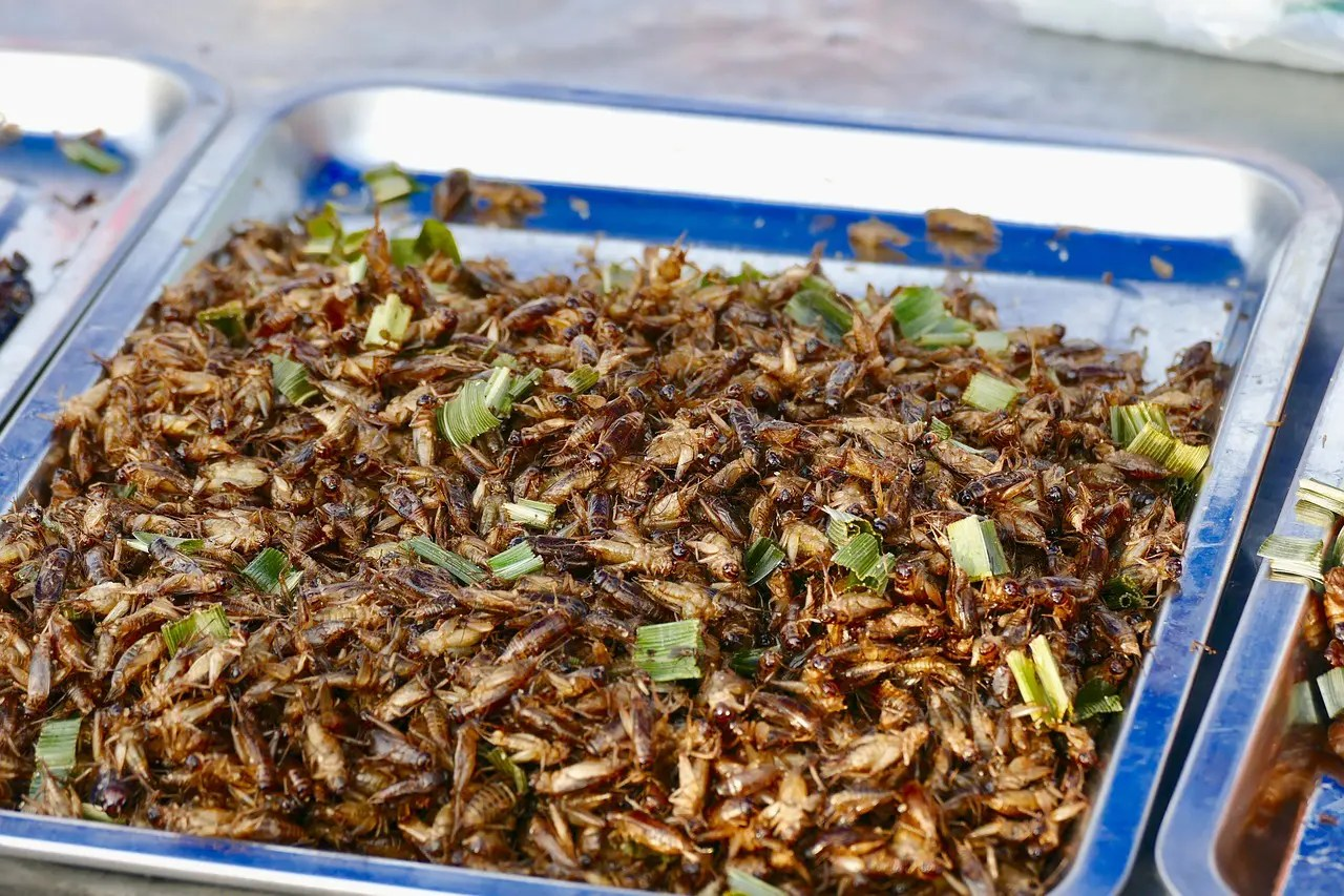 Are Crickets Really Safe to Eat?