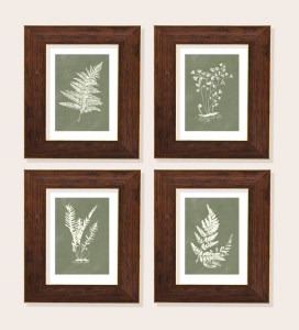 Fern illustrations