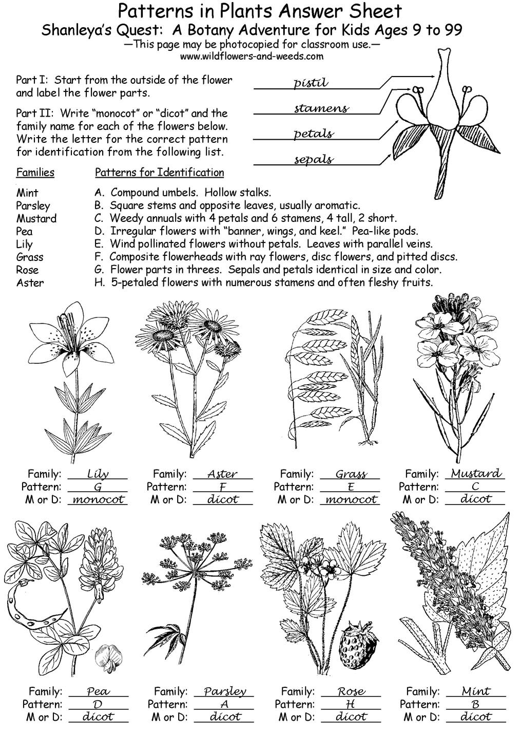 Lesson Plans Science Biology Botany Patterns In Plants