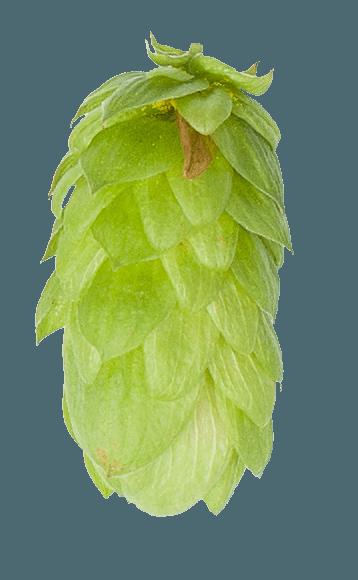Explore Different Hops  Hopsteiner  Hop Profiles