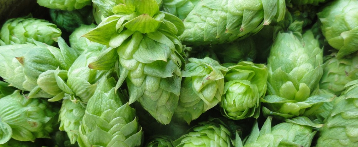Boutique houblon bio Hops Close Crop