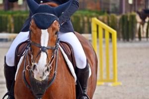 Todo lo que necesitas para practicar la equitación en un mismo lugar