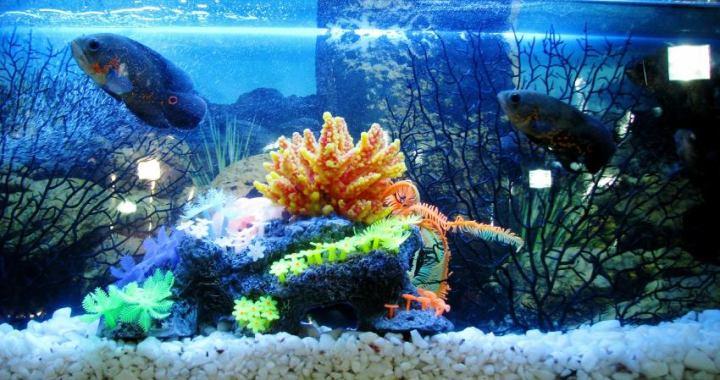 El Aquascaping, hobby donde las plantas de acuario son protagonistas