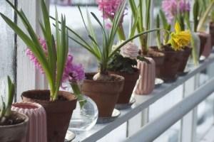 Da a tu hogar un toque mucho más natural gracias a esta tienda online de plantas