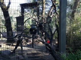 Safari West (115)