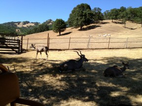 Safari West (6)