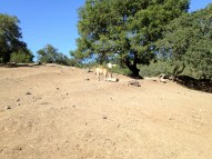 Safari West (68)