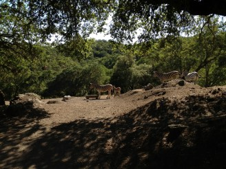 Safari West (88)