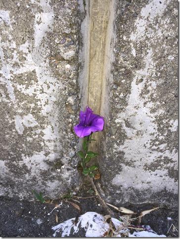 Wall flower (2)