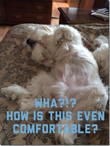 Puppies Sleeping (2)