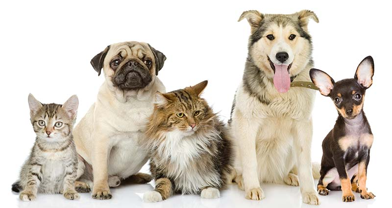 pets hornsby shire council