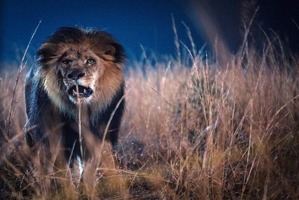 1. Zoo, lion