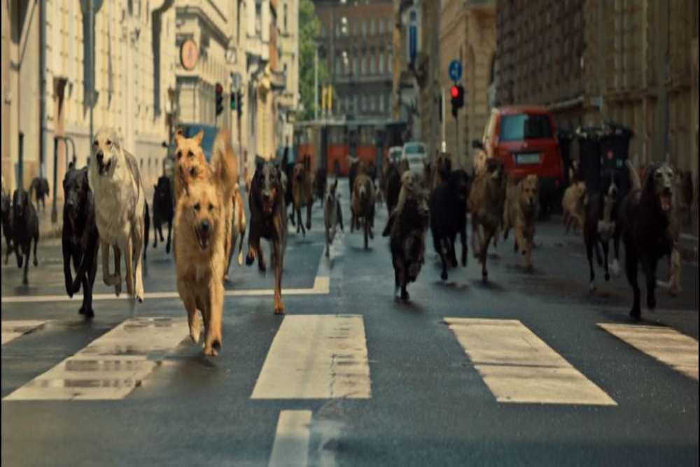 4. White God, dogs running
