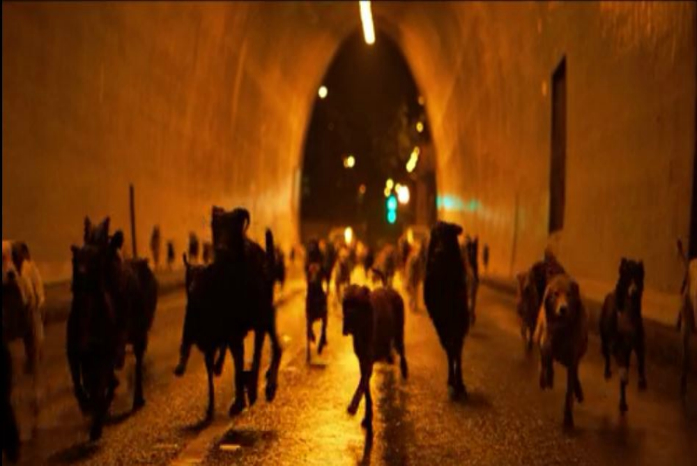 5. White God, dogs in tunnel