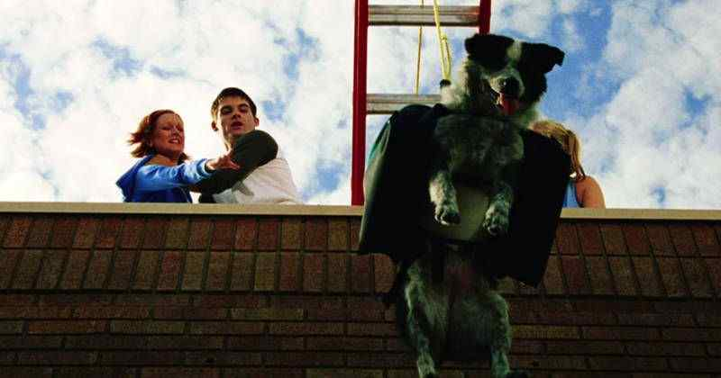 All Dogs Go To Heaven: Examining A Dog's Role in Horror Movies.