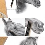 Horse Pencil Portraits By Melanie Phillips