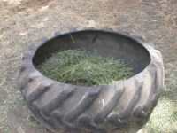Tires make inexpensive hay feeders.