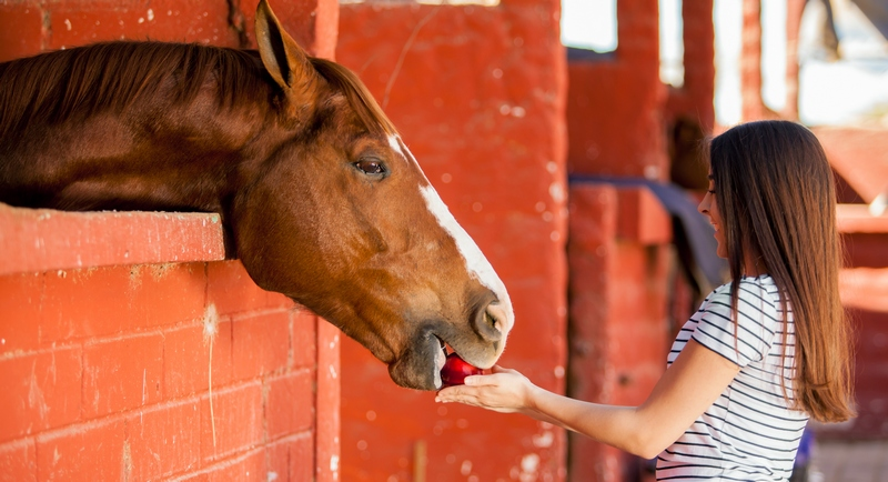 The Dietary Needs of High Performance Horses  Horse  Pet