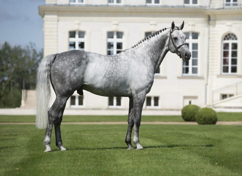 dark dapple grey horses jumping hanoverian horse diagram sears 26 horse kohler engine electrical diagram #14