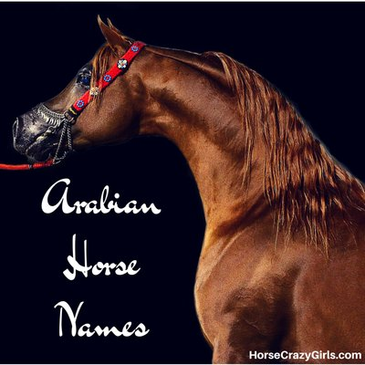 Arabian Horse Names