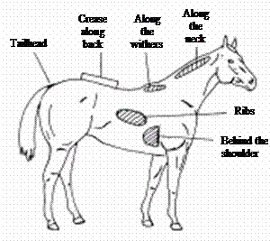 How to track your horse's Body Condition Score