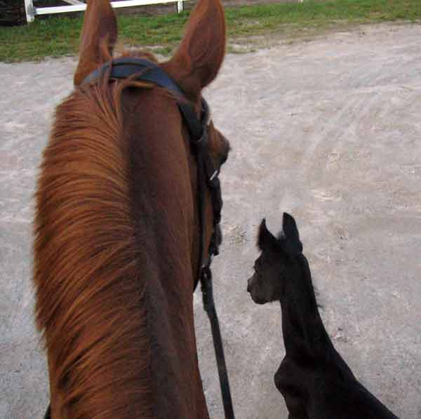 14 Reasons to Love Horseback Riding