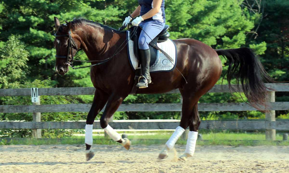 Steps For Horses : How to ride your excited horse in easy steps