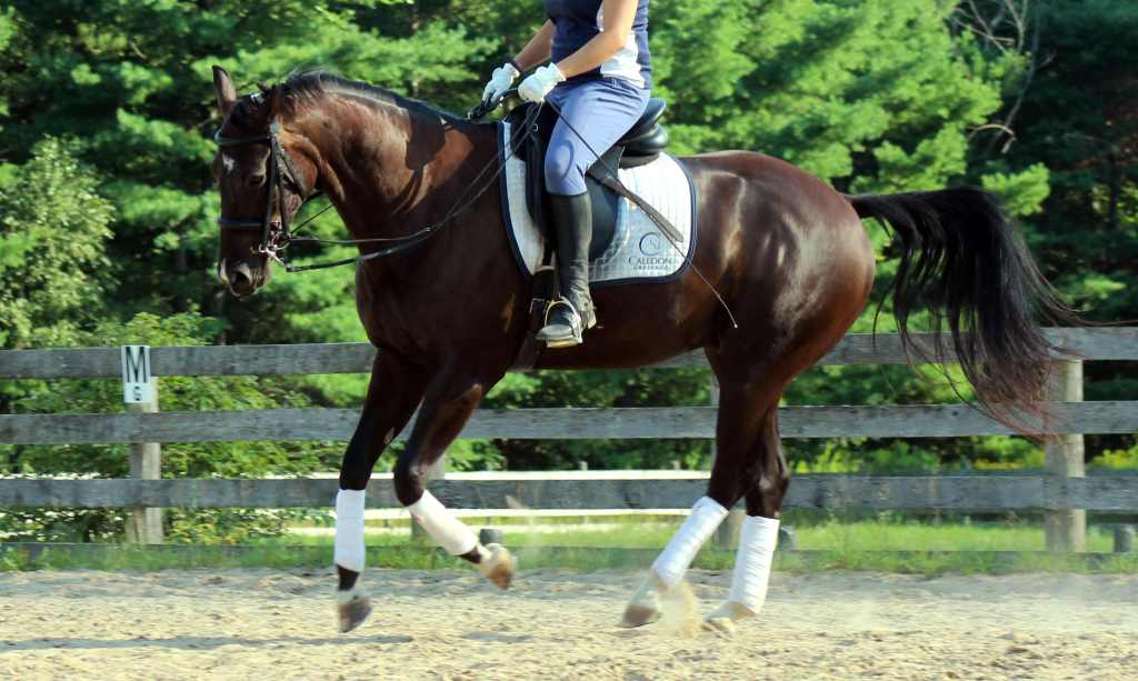 "Why You Don't Need to Panic When Your Horse ""Falls Apart"" During Your Ride"