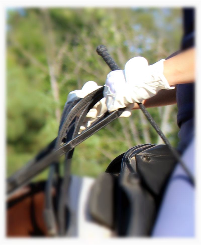 In Praise of the (Horse Riding) Hand