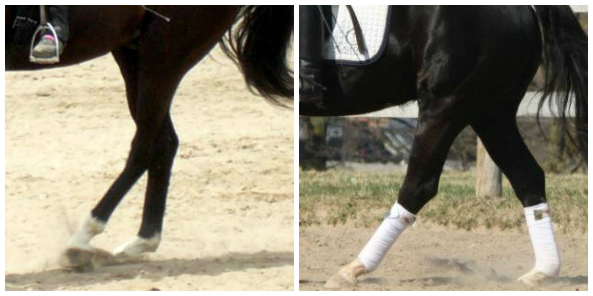 """How To """"Flow"""" from the Trot to the Walk"""