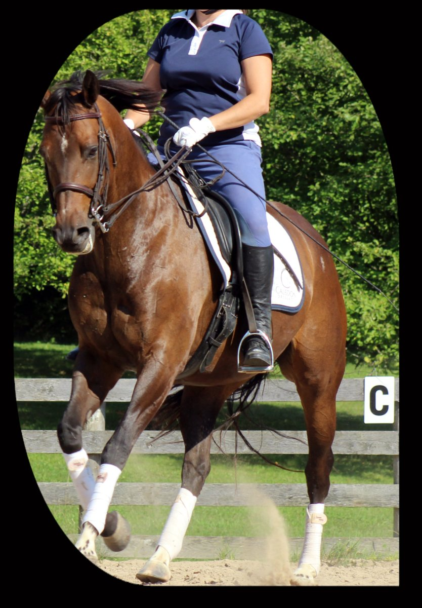 7 Essential Aids For An Epic Canter Transition