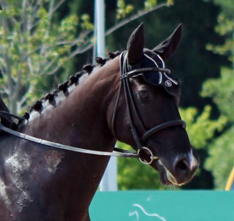 slobber horse