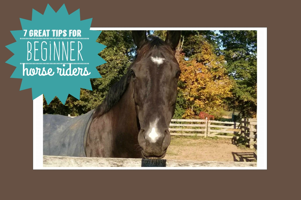 7 Great Tips For Beginner Horse Riders