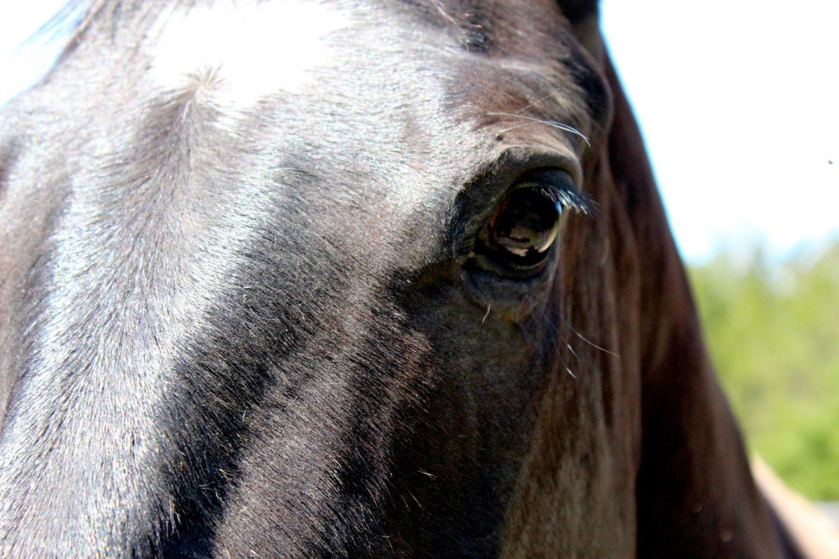 10 Strategies For The Nervous Horse Rider